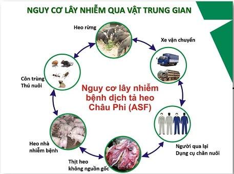 Một số đặc điểm chung của bệnh Dịch tả lợn châu Phi