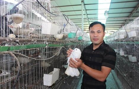Chàng trai du học Nga về quê nuôi chim bồ câu Pháp trở thành tỷ phú