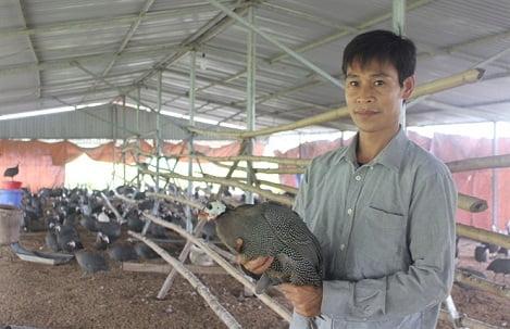 Người đầu tiên lập trang trại 'khủng' nuôi gà sao thành công ở Mai Đình