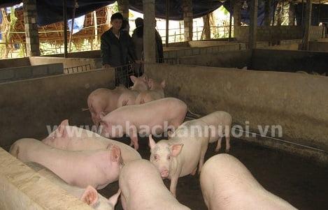 Hà Giang: Phát huy thế mạnh của các trang trại chăn nuôi