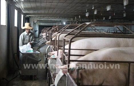 Hiệp hội Chăn nuôi Đồng Nai: Đề xuất các giải pháp phòng chống bệnh Dịch tả heo Châu Phi