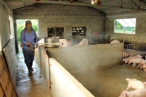 Giá lợn ở Hưng Yên tiếp tục tăng