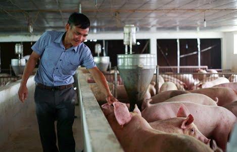 Giá heo hơi hôm nay 1/10: Giá lợn hơi tiếp tục tăng mạnh, Cục Chăn nuôi nói gì?