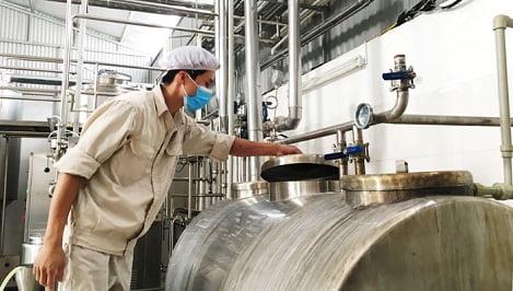 Thu tiền tỷ từ chuỗi liên kết bò sữa