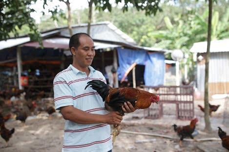 """Câu chuyện về hành trình """"Nam tiến"""" của gà giống Lượng Huệ"""