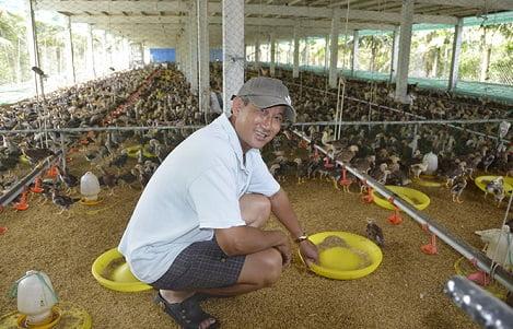 Xây chuồng 2 tầng nuôi gà thu lãi trăm triệu