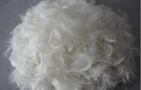 Bột lông vũ - nguồn protein tự nhiên cho thức ăn chăn nuôi