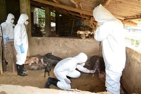 Diễn tập phòng, chống dịch tả lợn châu Phi tại Lào Cai