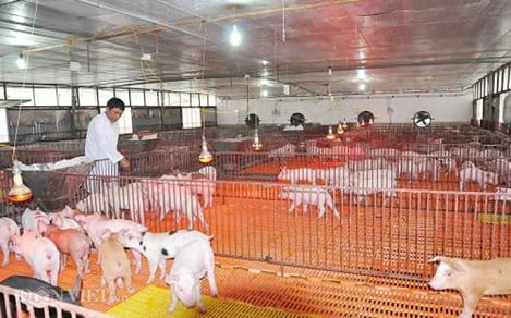 CPTPP - cơ hội và thách thức đối với ngành chăn nuôi