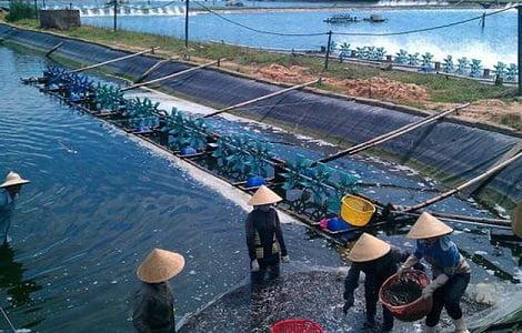 Chăn nuôi đặt mục tiêu vào nhóm xuất khẩu tỷ USD năm 2020