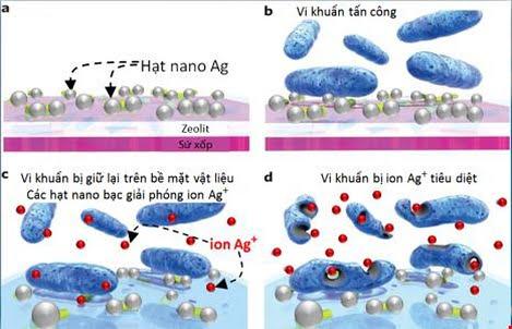 Nano Silver Max: Khử trùng nổi trội, hỗ trợ phòng dịch FMD và ASF