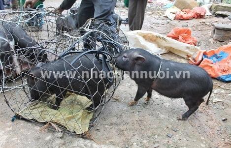 Xuống chợ Mèo Vạc mua lợn đen Lũng Pù…