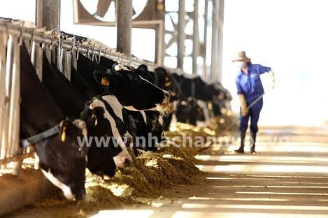 Công thức thức ăn cho vật nuôi mùa nóng