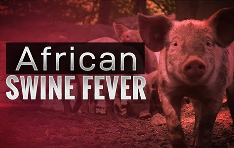 Dịch tả heo châu Phi gây áp lực lên giá thực phẩm tại Trung Quốc