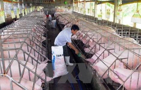 Thông tư 02 về danh mục sản phẩm thức ăn chăn nuôi sẽ được điều chỉnh cho phù hợp