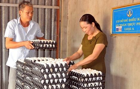 Bắc Ninh: Giá trứng gà bán tại trang trại giảm 500-700 đồng/quả so trước Tết