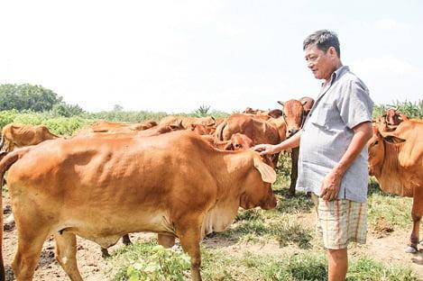 Công nghệ '3 trong 1' quản lý chăn nuôi ĐBSCL