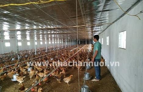 Tiết kiệm chi phí đáng kể khi gà thịt được cho ăn khẩu phần cơ bản bắp – nành với mưc protein thấp và có bổ sung protease