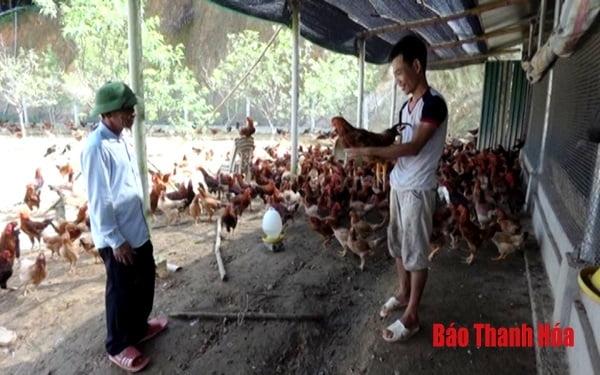 Thanh Hóa: Huyện Như Xuân thu hút được 4 doanh nghiệp liên kết trong lĩnh vực chăn nuôi