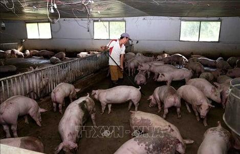 Tạo hành lang pháp lý trong xử lý môi trường để phát triển chăn nuôi bền vững