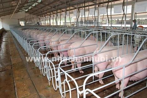 Nhiệt sưởi bổ sung trong chăn nuôi heo