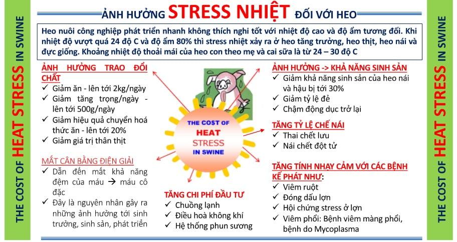 Stress nhiệt trên heo nuôi công nghiệp và biện pháp phòng tránh