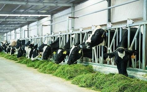Các yêu cầu về kỹ thuật và chất lượng đối với sản phẩm sữa Việt Nam xuất khẩu sang Trung Quốc (phần 1)