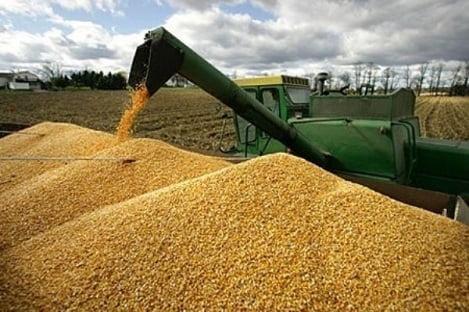 Ngành chăn nuôi chi hàng tỷ USD để nhập khẩu đậu tương, lúa mì, ngô