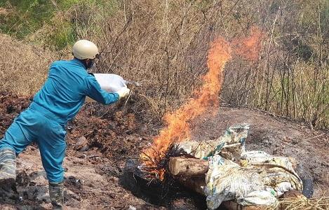 Biện pháp xử lý, tiêu hủy lợn mắc bệnh Dịch tả lợn châu Phi bằng phương pháp đốt