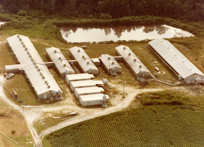 Câu chuyện về người đã thay đổi ngành chăn nuôi thế giới
