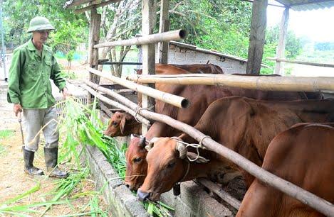 Tuyên Quang: Hướng đi mới của các hộ chăn nuôi lợn