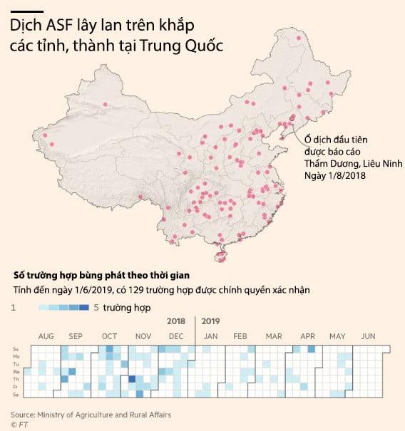 Giá heo giống Trung Quốc tăng 77% khi dịch ASF không có dấu hiệu chấm dứt