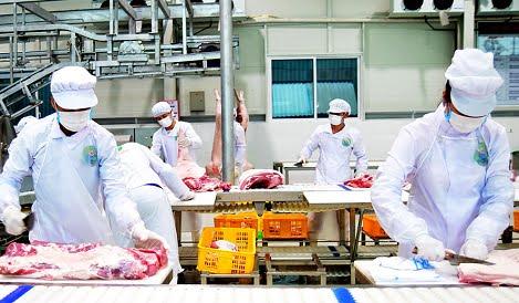 Không vội tái đàn lợn: Tìm nguồn thực phẩm thay thế
