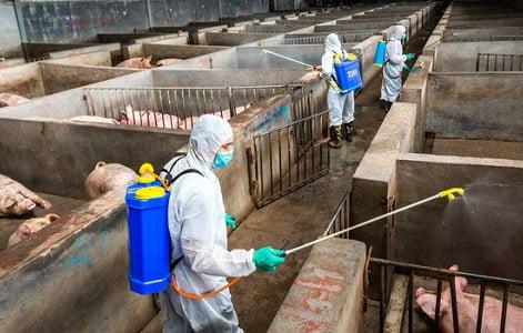 Giá thịt lợn tại Trung Quốc có thể tăng đến 70% tiềm ẩn khả năng lạm phát tồi tệ