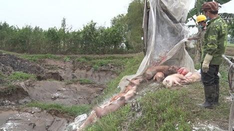 Chính phủ ban hành Nghị quyết mới phòng chống dịch tả lợn châu Phi