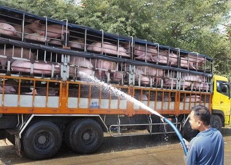 """Quy định """"cấm vận chuyển lợn"""" đang làm khó nhiều doanh nghiệp chăn nuôi"""