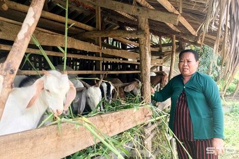 Dê tăng giá, người chăn nuôi vẫn chưa vội bán