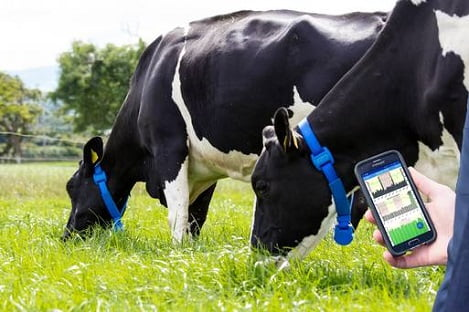 Chăn nuôi bò sữa thời đại công nghệ (P2)