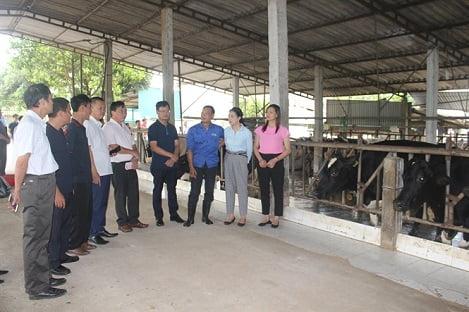 Việt Nam đứng thứ 6 châu Á về sản lượng sữa