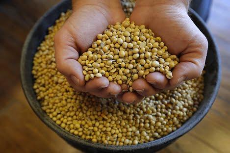 Chiến tranh thương mại vẫn đang đè nặng hạt đậu nành