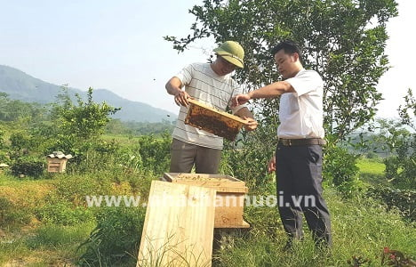 Hà Giang: Nuôi ong du mục cho thu nhập trên 350 triệu đồng mỗi năm