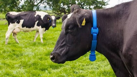 Chăn nuôi bò sữa thời công nghệ (P1)