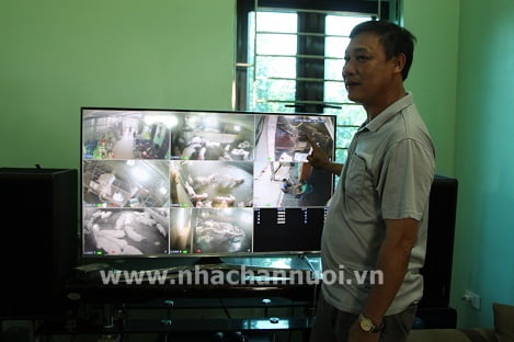 Hà Nội: Cách ly tốt giúp trại heo chiến thắng dịch tả lợn châu Phi