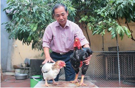 Cơ hội chính của ngành chăn nuôi gà nước ta