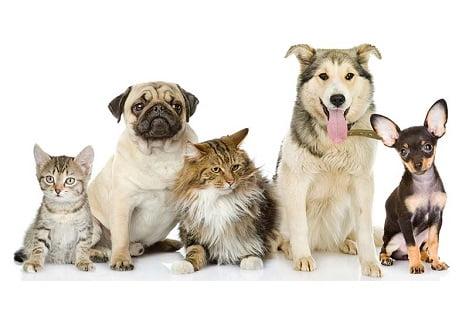 TP Hồ Chí Minh: Làm đẹp cho thú cưng ngày càng được quan tâm
