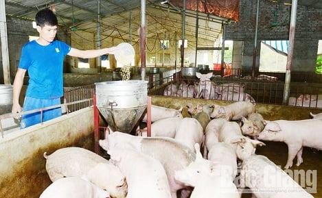 Chăn nuôi lợn: Thay đổi để thích ứng