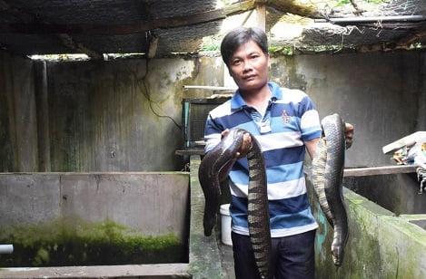 Nông dân Trương Chí Thức: Lãi hàng trăm triệu đồng từ nuôi rắn ri voi
