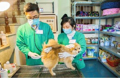 Hà Nội lấy 183 mẫu giám sát sau tiêm phòng vắc xin dại trên chó, mèo