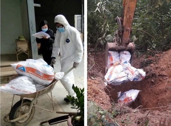 Cúm gia cầm H5N6 xuất hiện tại xã Quỳnh Tam (Quỳnh Lưu)