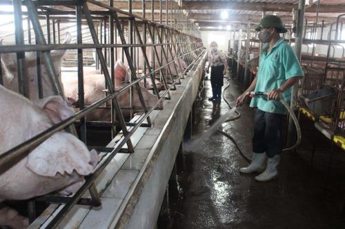 Luật Chăn nuôi mở rộng phạm vi điều chỉnh quản lý theo chuỗi giá trị